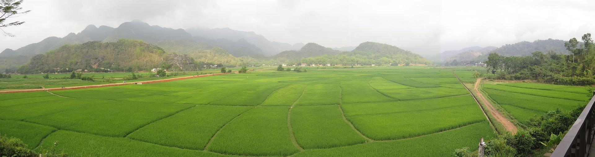 Culture au vietnam